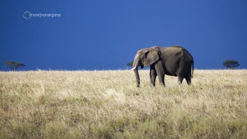 Blue Elephant 3 1334 MTO