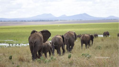 elephant butts mto